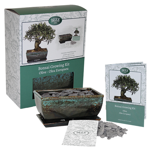 Grow Your Own Bonsai Set - Olive