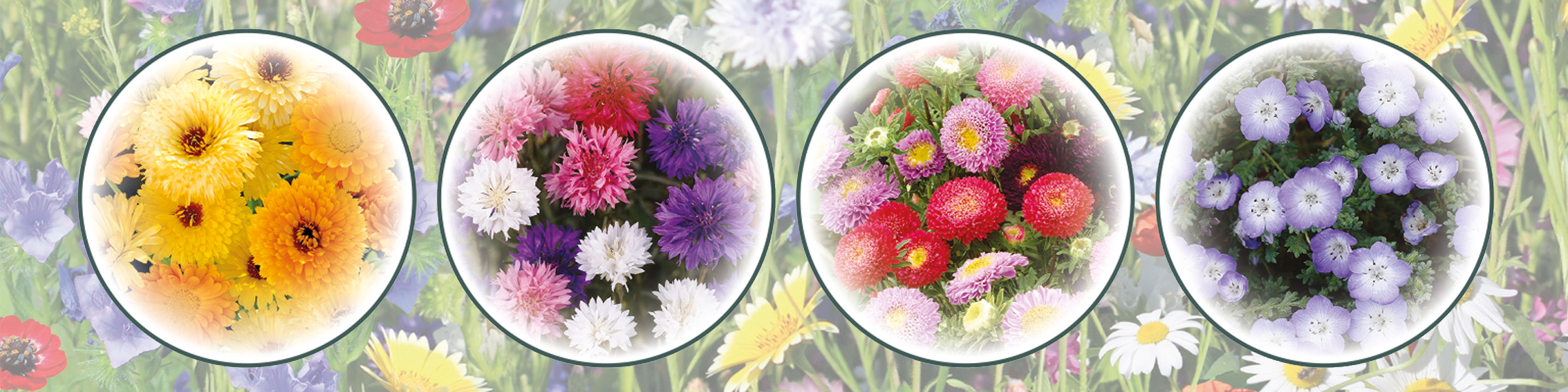 Bees™ - Wildflower Seed Carpet