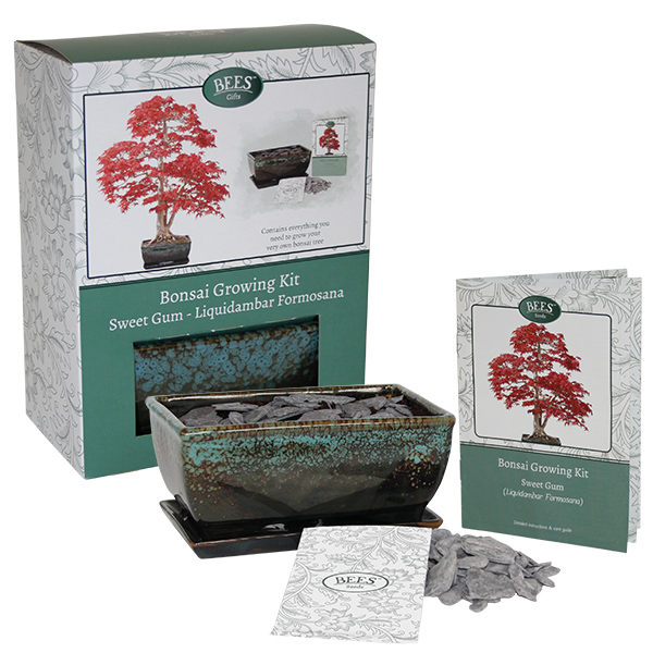 Bees Grow Your Own Sweet Gum Bonsai Tree